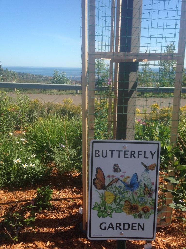 2015.09.20 ddp butterfly