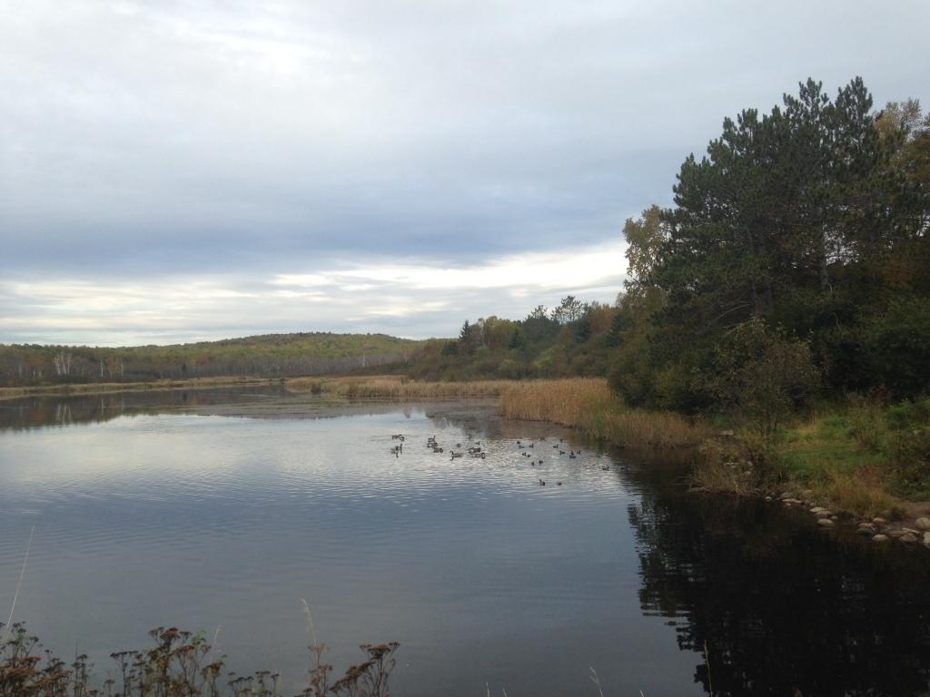 14.10.05 ddp geese