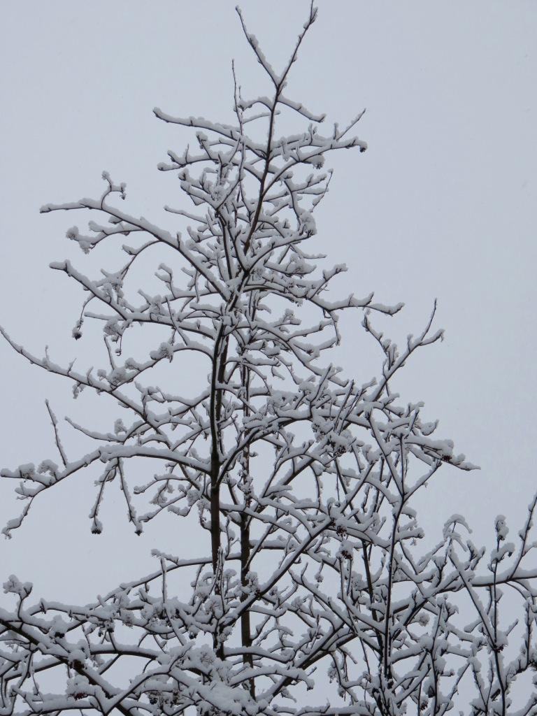 2016.03.26. ddp snow flocked tree.jpg - 1