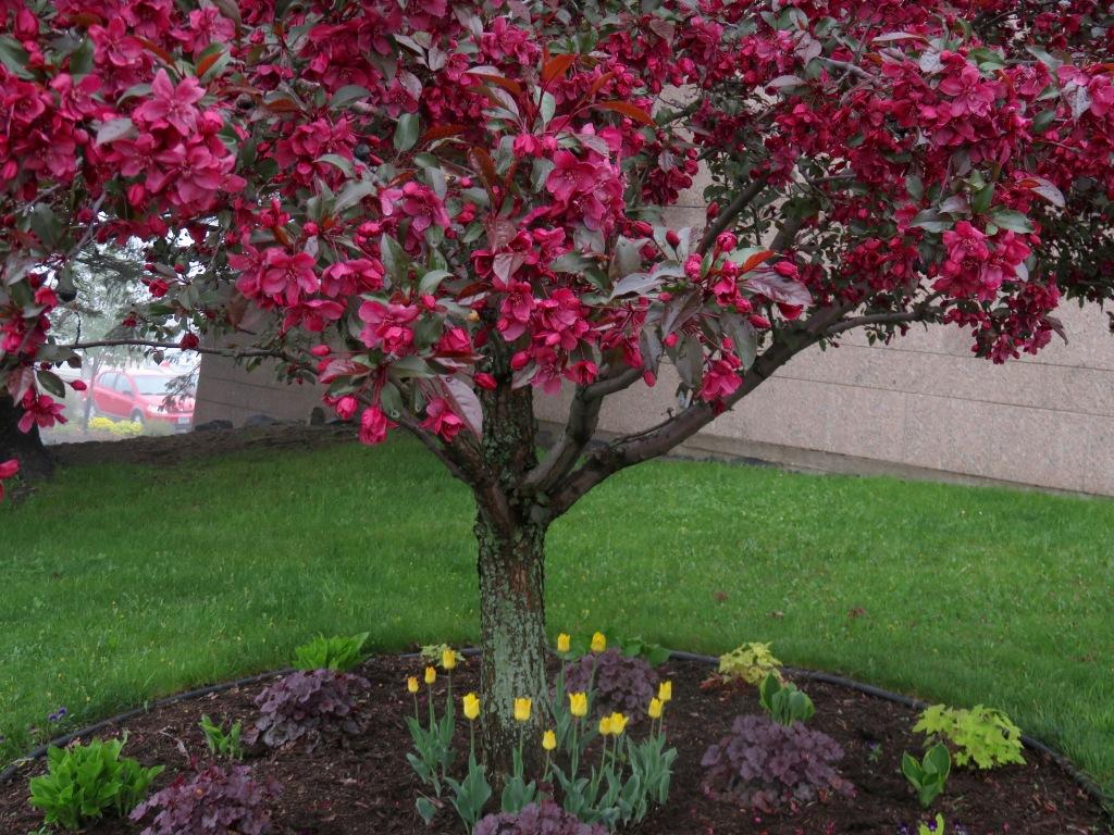 0526.ddp. tree .jpg - 1