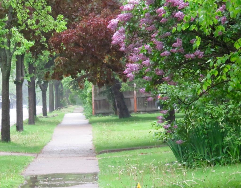 160604 ddp rainy summer day.jpg - 1