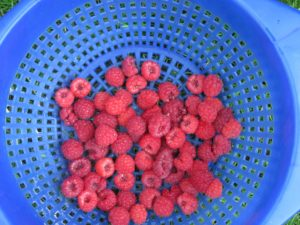 0730.ddp raspberries bowl.jpg - 1