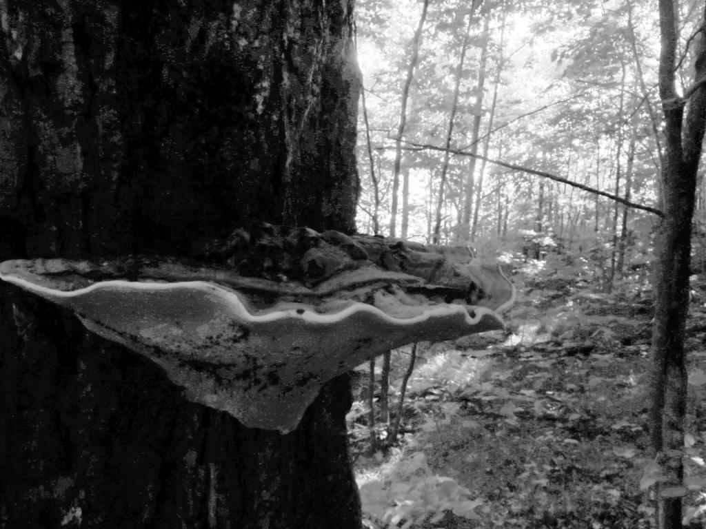 0902.ddp.mushroomjpg